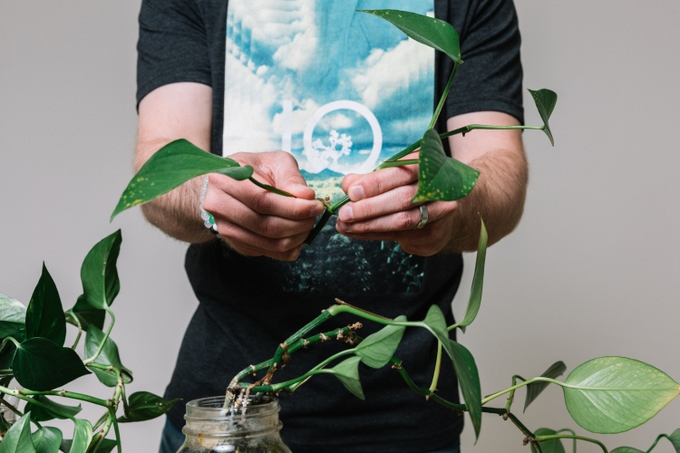 Jake is trimming the leaf off of a plant in his tentree shirt and lokai balance bracelets.